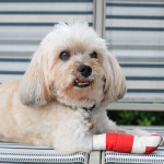Injured dog 3